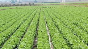 Foto de Alltech Crop Science obtiene el registro como biofertilizantes para su línea CONTRIBUTE