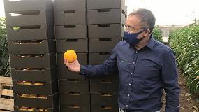 Foto de Ecoculture Biosciences ofrece la tecnología XStress para proteger a los cultivos del frío