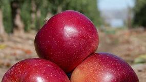 Foto de La manzana adaptada al cambio climático ya está aquí