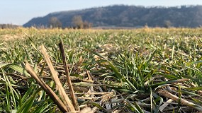 Foto de La Agricultura de Conservación, una práctica para evitar la pérdida y degradación de los suelos