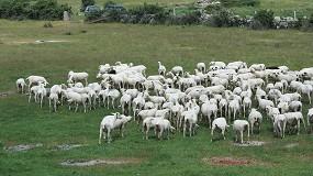 Foto de La Junta de Andalucía da por erradicada la brucelosis ovina y caprina