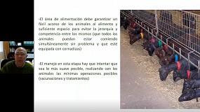 Foto de Estrategias para realizar un adecuado preparto en caprino lechero