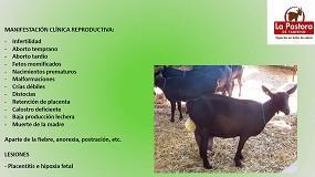 Foto de Clasificación de las diferentes causas de abortos en ganado caprino