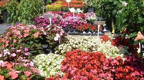 Foto de El sector de flores y plantas finaliza 2020 con unas exportaciones de 435 millones de euros