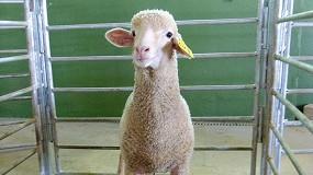 Foto de El coste de alimentación en cebo de corderos llega a su tope máximo desde julio de 2013