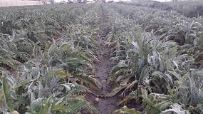 Foto de La producción hortícola se frena por el mal tiempo y encarece su precio en el mercado