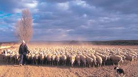 Foto de Las cooperativas piden que las ayudas asociadas de la PAC sean de 47 euros por oveja en pastoreo