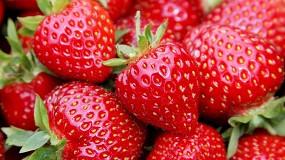 Foto de El mercado canadiense se abre a las fresas españolas