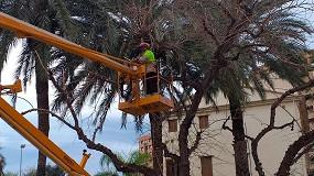 Foto de El Ayuntamiento de Valencia realizó en enero más de un millar de trabajos programados de poda