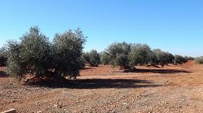 Foto de Influencia de la variedad y del ambiente en las características productivas y la composición del aceite en olivo