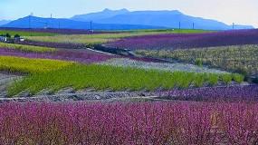 Foto de La campaña de fruta de hueso en 2021 comienza con una buena floración en las regiones tempranas