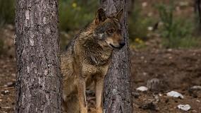 Foto de Las organizaciones agrarias reiteran su rechazo al borrador del Plan de Gestión del Lobo