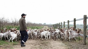 Foto de La producción de leche de cabra vuelve a derrumbarse en febrero y ya desciende un 10,3% anual