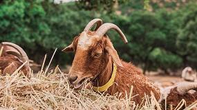 Foto de Andalucía ya representa más del 50% de los productores españoles de caprino de leche