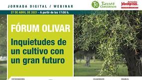 Foto de El olivar español, ante sus grandes retos y oportunidades