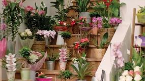 Foto de Lidl duplica sus compras nacionales de flores, plantas y sustratos hasta los 10 M€ en 2020