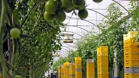 Foto de Murcia y Andalucía registran caídas del 8% y 7% en la exportación hortofrutícola del primer trimestre