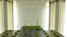 Foto de Floración acelerada de plantas en suelos con bajo contenido de nitrógeno