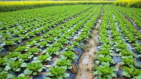 Foto de Itene participa en el desarrollo de un proceso de degradación de plásticos agrícolas mediante el uso de insectos y lombrices que los ingieren