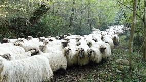 Foto de Ayudas totales de 85.000 euros para los rebaños de Navarra que realicen trashumancia