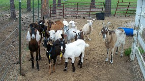Foto de Los veterinarios advierten del riesgo de enfermedades zoonósicas por la pérdida de biodiversidad