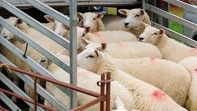 Foto de EFSA recopila opiniones científicas sobre el bienestar animal en el transporte para revisar la legislación