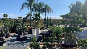 Foto de Plantas tropicales, la elección perfecta para el verano