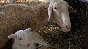Foto de El CITA de Aragón presenta sus innovaciones en investigación ovina en el Congreso de la EAAP