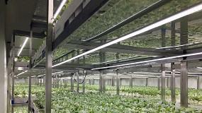 Foto de Buresinnova, pionera en iluminación artificial de cultivos