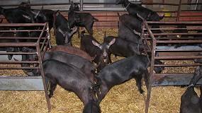 Foto de Más del 80% de los productores de leche de cabra se concentran en el sur peninsular