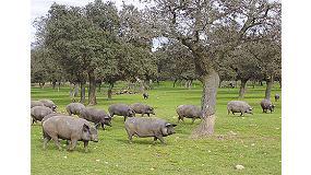 Fotografia de La import�ncia de conservar la biodiversitat de les races porcines aut�ctones