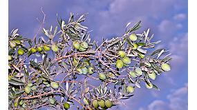 Foto de Calidad y control en el aceite de oliva