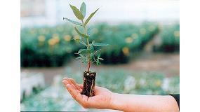 Fotografia de El paper en 2050: els bioproductos del bosc