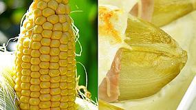 Foto de Huercasa logra el 65% de la cuota de mercado europeo de maíz cocido y envasado al vacío