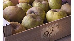 Foto de Más de 80.000 kg de manzanas comercializados hasta el momento