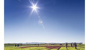 Foto de Rijk Zwaan presenta sus novedades en las IV Jornadas internacionales de cultivos de invierno al aire libre