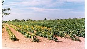 Foto de Humita 20: multicorrector de clorosis férrica especial para viñas