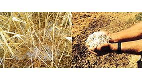 """Foto de Los agricultores hacen balance de los efectos de """"la peor oleada de granizo en años"""""""