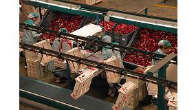 Foto de Scholar irrumpe como solución para incrementar la exportación de fruta de hueso