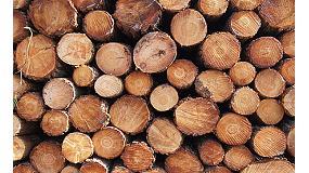 Foto de Diagnóstico del sector de la madera en España