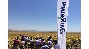 Foto de Syngenta presenta en campo las variedades Sy Kiara y Sy Bento junto a Bosfora, la variedad número uno en la RAEA 2013