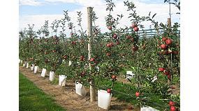Foto de Una pared de manzanas
