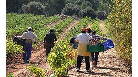 Foto de Los agricultores afrontan la vendimia con los precios más bajos en 25 años