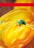 Productos Batlle: semillas híbridas