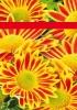 Productos Batlle: semillas flores