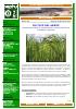 Cultivo de arroz 2.