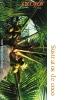 Sustratos de coco (SPA)