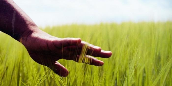 Cómo evitar enfermedades en agricultura sin el uso de químicos