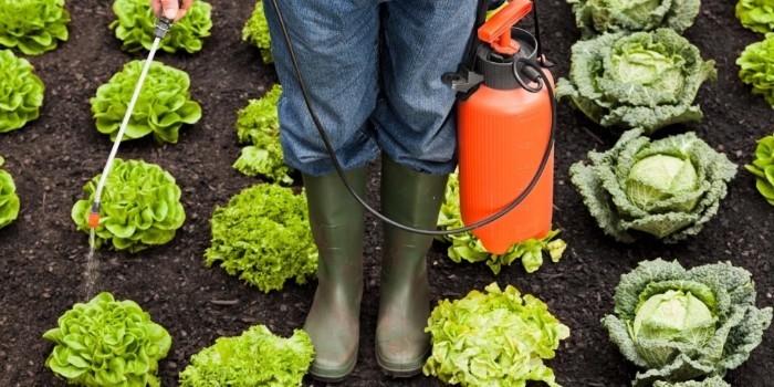 Influencia de las condiciones agronómicas en la calidad de los vegetales