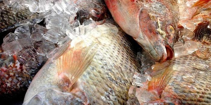Pescado y marisco congelado aumentan sus ventas un 3,5% frente al fresco que cede un 0,8%
